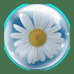 گل بابونه